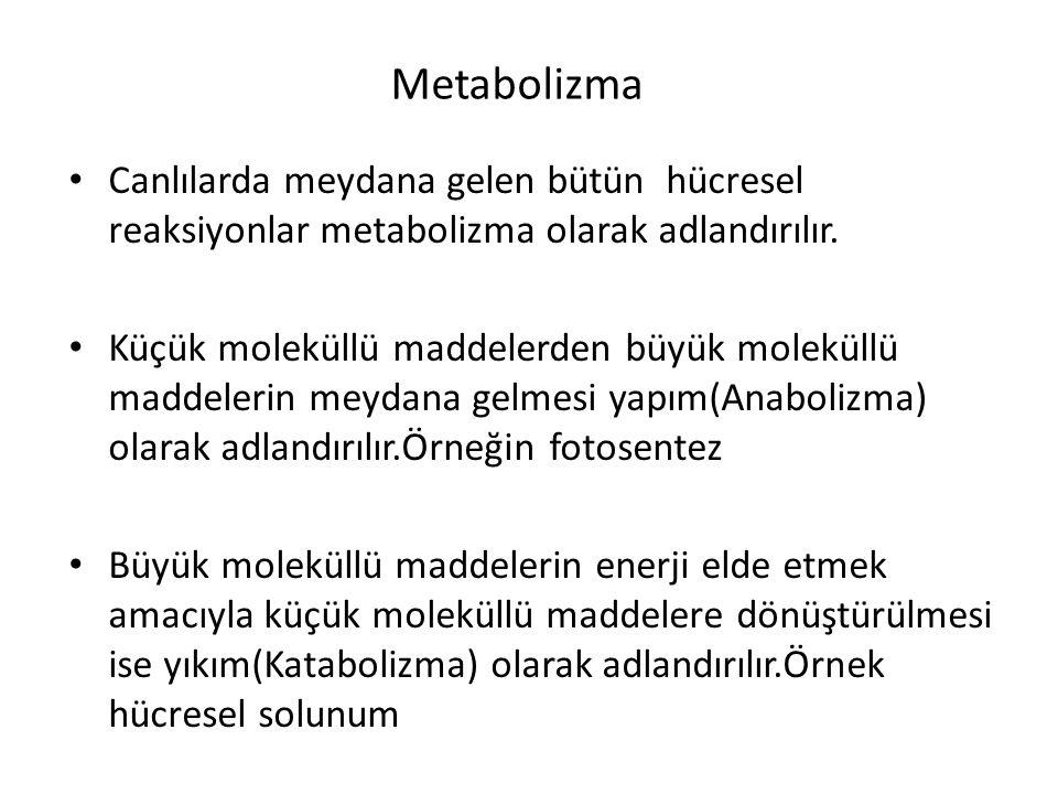 Metabolizma Canlılarda meydana gelen bütün hücresel reaksiyonlar metabolizma olarak adlandırılır.