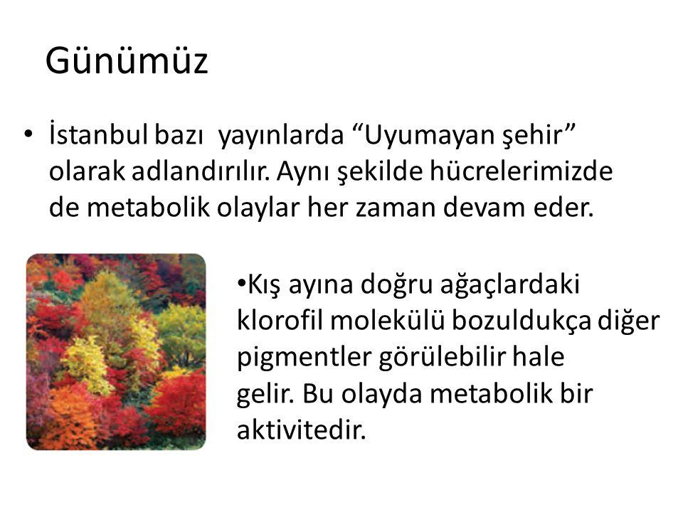 Günümüz İstanbul bazı yayınlarda Uyumayan şehir olarak adlandırılır. Aynı şekilde hücrelerimizde de metabolik olaylar her zaman devam eder.