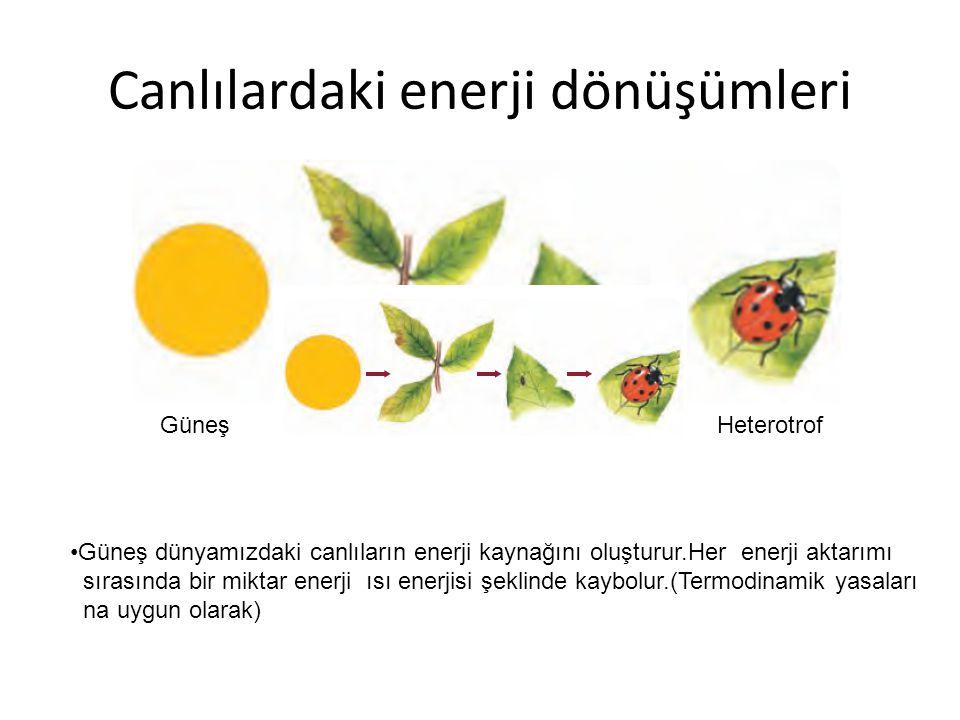 Canlılardaki enerji dönüşümleri