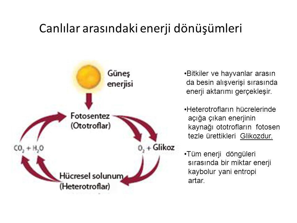 Canlılar arasındaki enerji dönüşümleri