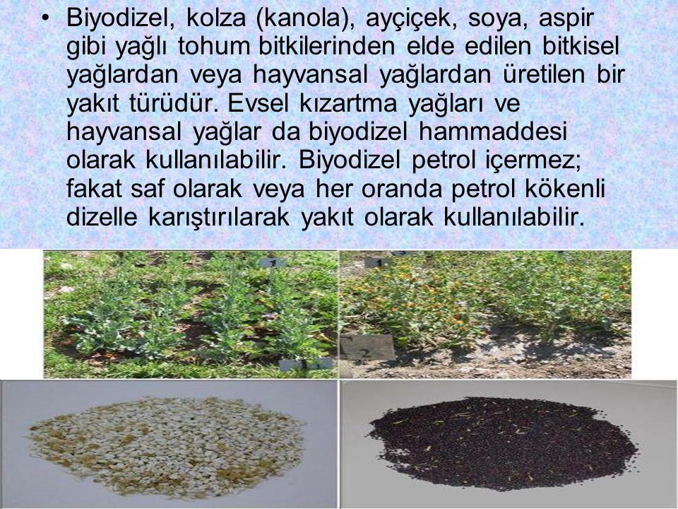 Biyodizel, kolza (kanola), ayçiçek, soya, aspir gibi yağlı tohum bitkilerinden elde edilen bitkisel yağlardan veya hayvansal yağlardan üretilen bir yakıt türüdür.
