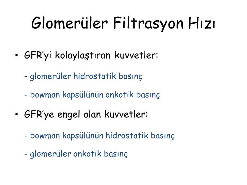 Glomerüler Filtrasyon Hızı