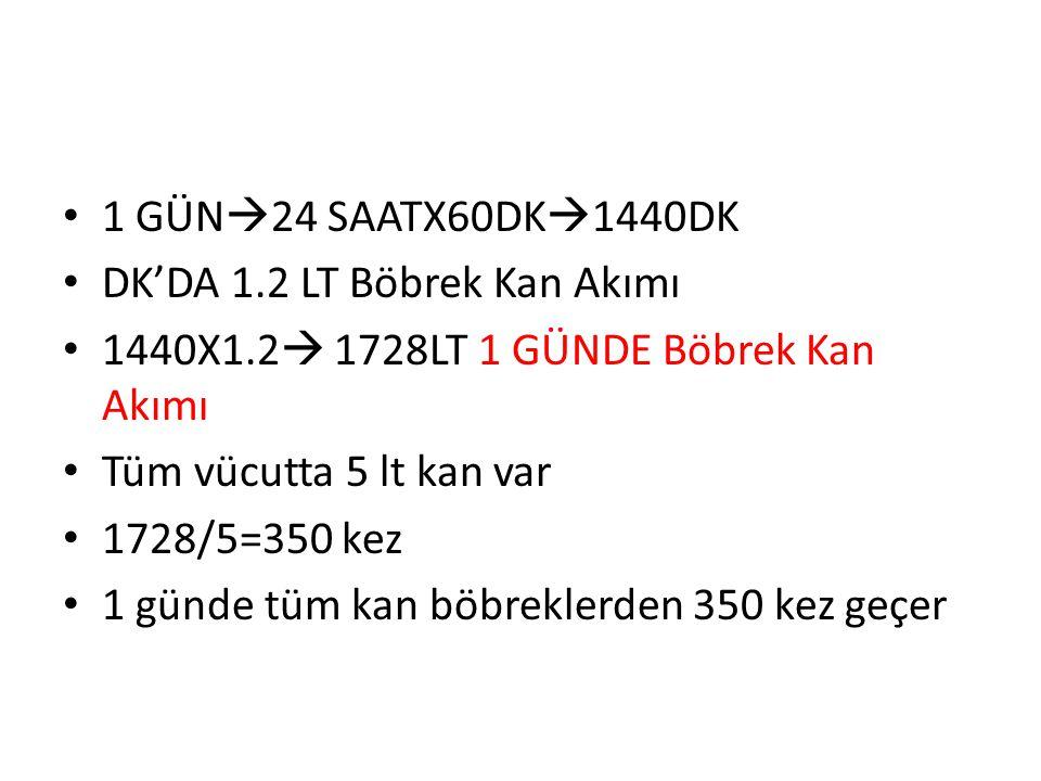 1 GÜN24 SAATX60DK1440DK DK'DA 1.2 LT Böbrek Kan Akımı. 1440X1.2 1728LT 1 GÜNDE Böbrek Kan Akımı.