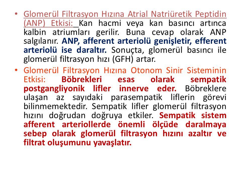 Glomerül Filtrasyon Hızına Atrial Natriüretik Peptidin (ANP) Etkisi: Kan hacmi veya kan basıncı artınca kalbin atriumları gerilir. Buna cevap olarak ANP salgılanır. ANP, afferent arteriolü genişletir, efferent arteriolü ise daraltır. Sonuçta, glomerül basıncı ile glomerül filtrasyon hızı (GFH) artar.