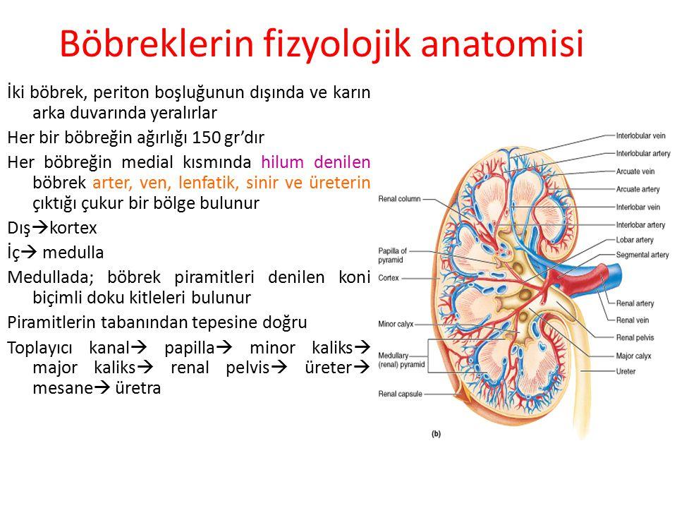 Böbreklerin fizyolojik anatomisi
