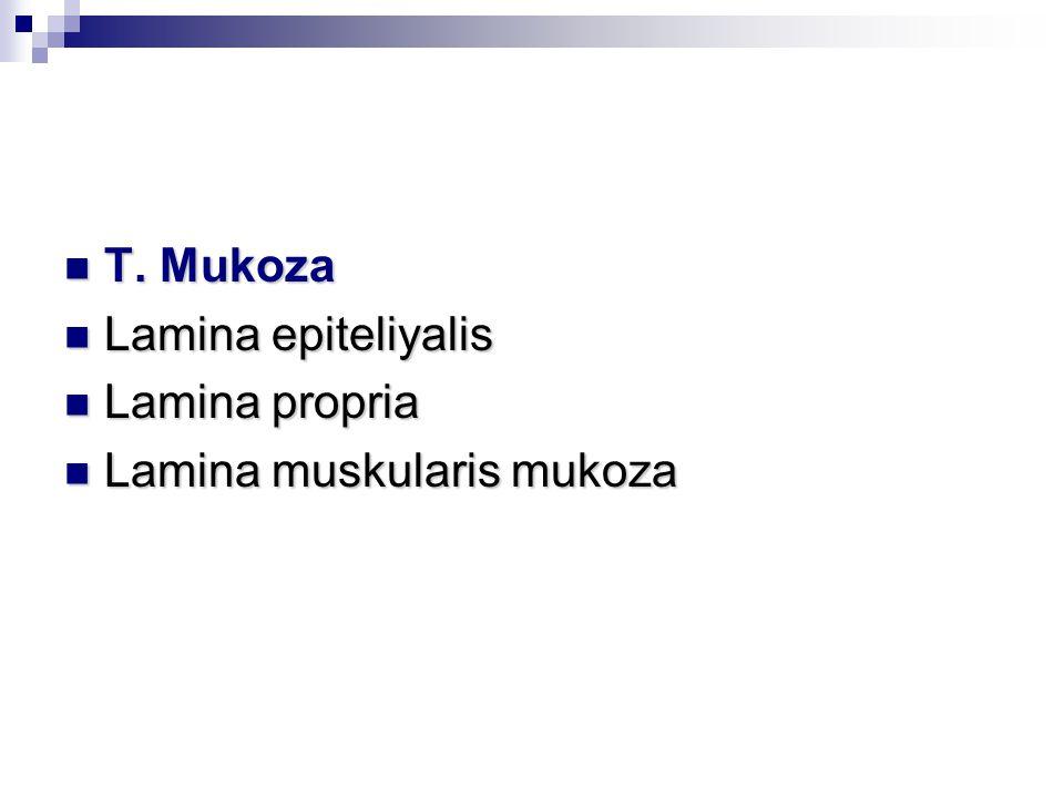 T. Mukoza Lamina epiteliyalis Lamina propria Lamina muskularis mukoza