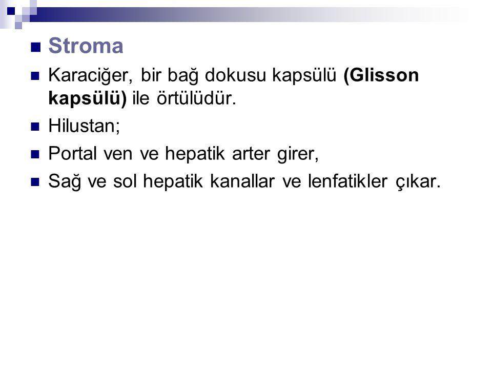 Stroma Karaciğer, bir bağ dokusu kapsülü (Glisson kapsülü) ile örtülüdür. Hilustan; Portal ven ve hepatik arter girer,