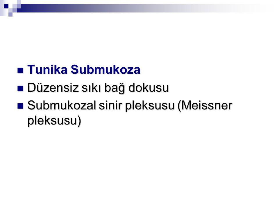 Tunika Submukoza Düzensiz sıkı bağ dokusu Submukozal sinir pleksusu (Meissner pleksusu)