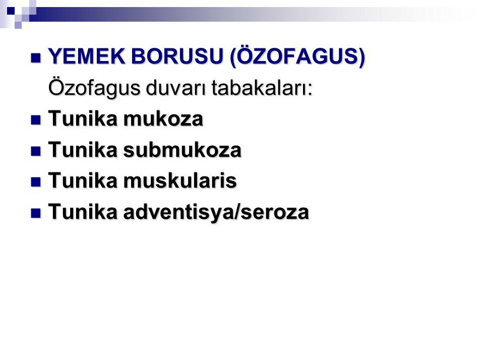 YEMEK BORUSU (ÖZOFAGUS)