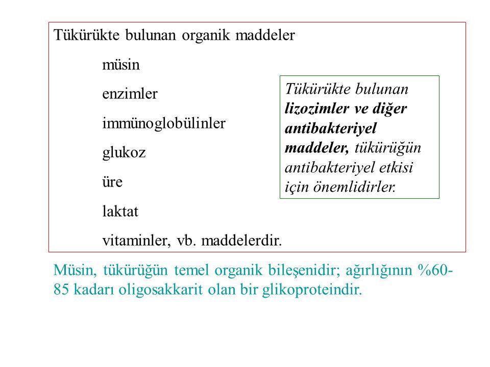 Tükürükte bulunan organik maddeler