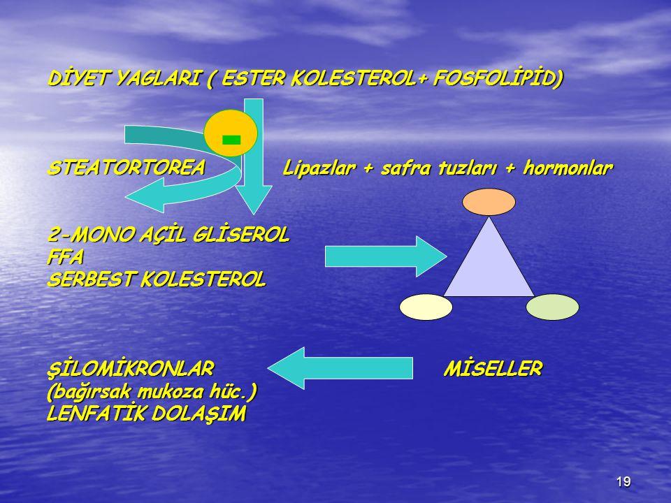 DİYET YAGLARI ( ESTER KOLESTEROL+ FOSFOLİPİD) STEATORTOREA Lipazlar + safra tuzları + hormonlar 2-MONO AÇİL GLİSEROL FFA SERBEST KOLESTEROL ŞİLOMİKRONLAR MİSELLER (bağırsak mukoza hüc.) LENFATİK DOLAŞIM