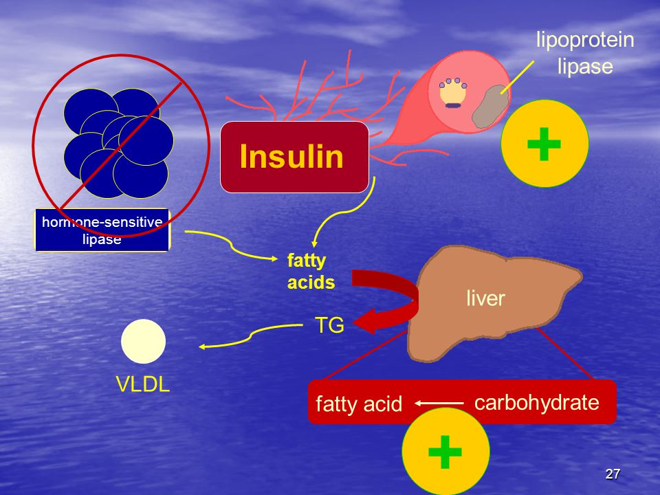 + + Insulin lipoprotein lipase liver TG VLDL fatty acid carbohydrate