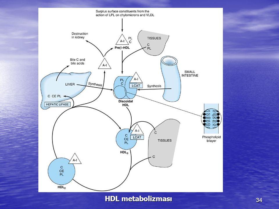 HDL metabolizması