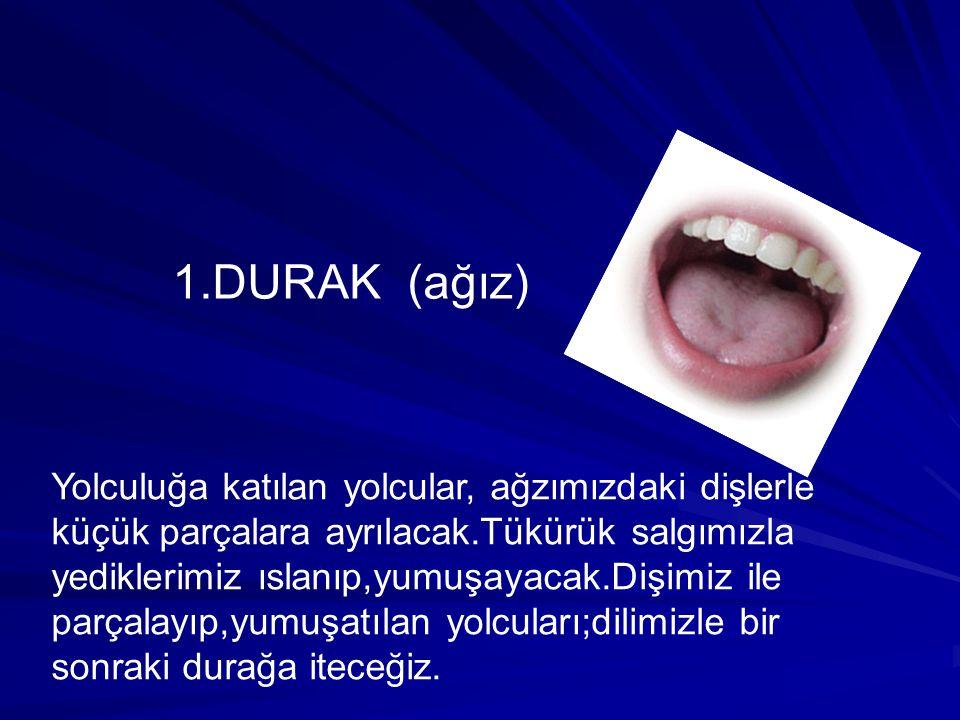 1.DURAK (ağız)
