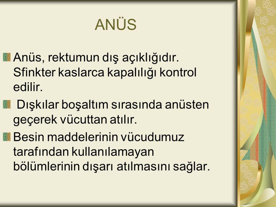 ANÜS Anüs, rektumun dış açıklığıdır. Sfinkter kaslarca kapalılığı kontrol edilir. Dışkılar boşaltım sırasında anüsten geçerek vücuttan atılır.