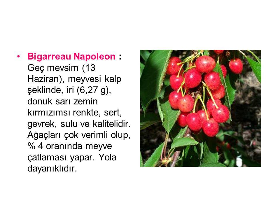 Bigarreau Napoleon : Geç mevsim (13 Haziran), meyvesi kalp şeklinde, iri (6,27 g), donuk sarı zemin kırmızımsı renkte, sert, gevrek, sulu ve kalitelidir.