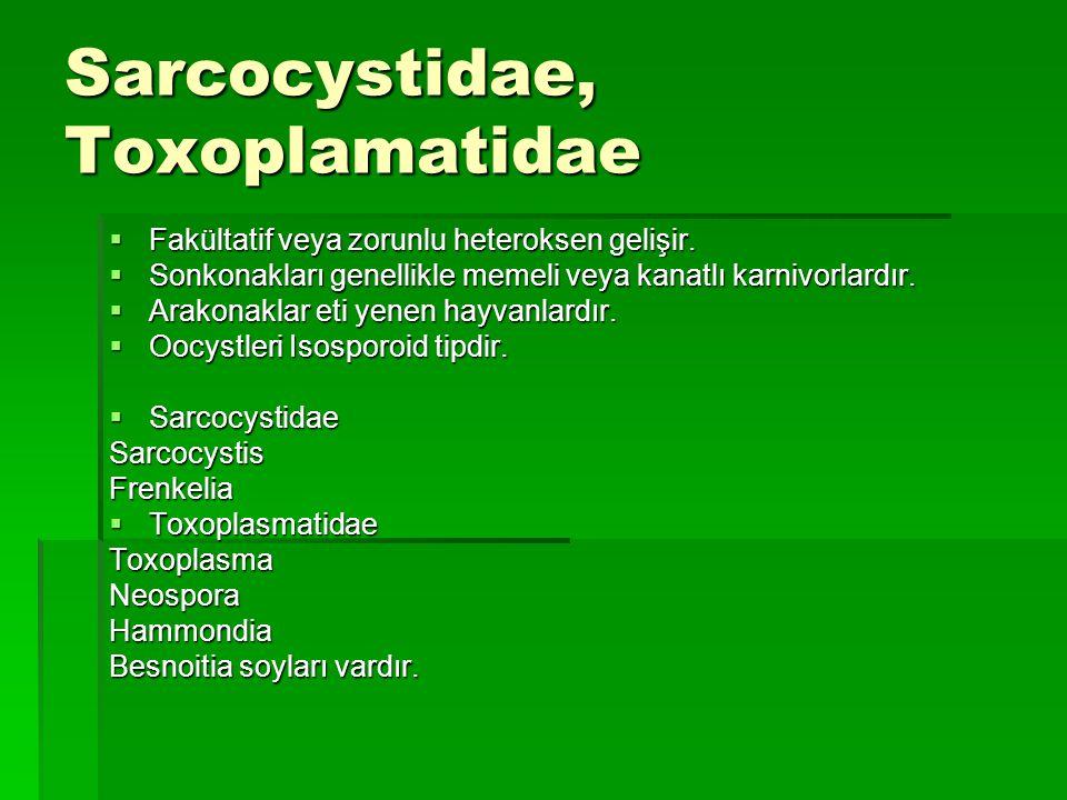 Sarcocystidae, Toxoplamatidae