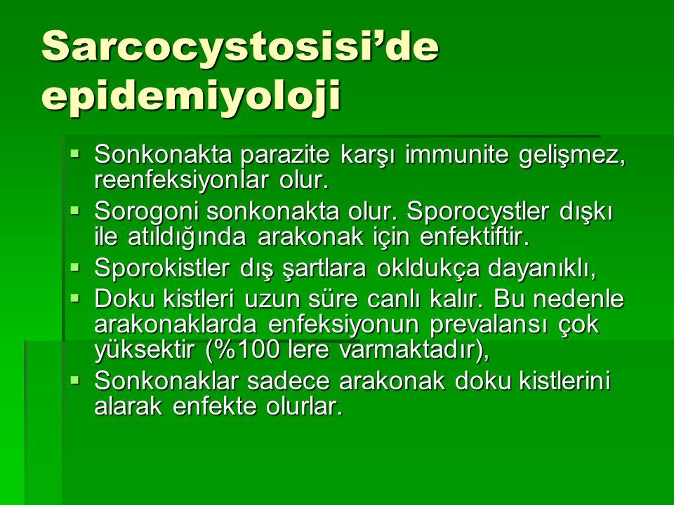 Sarcocystosisi'de epidemiyoloji