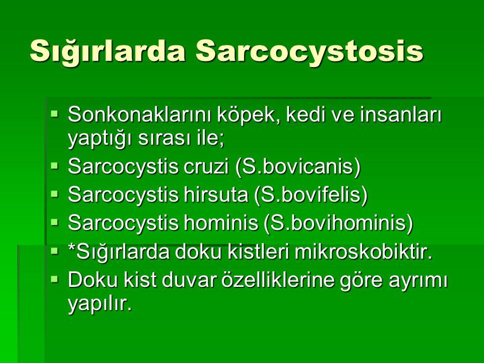 Sığırlarda Sarcocystosis