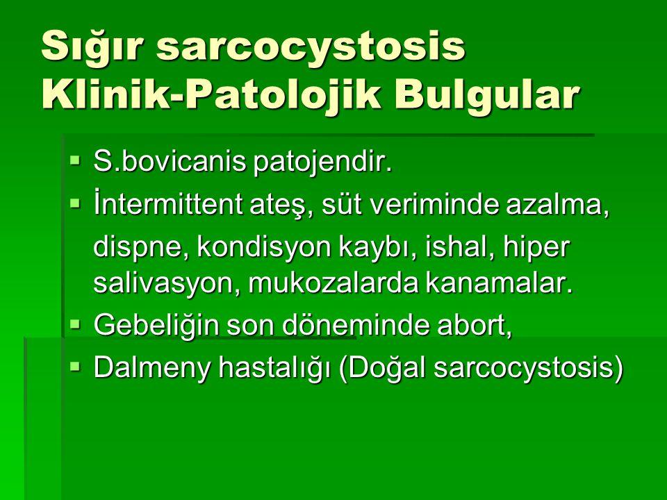 Sığır sarcocystosis Klinik-Patolojik Bulgular