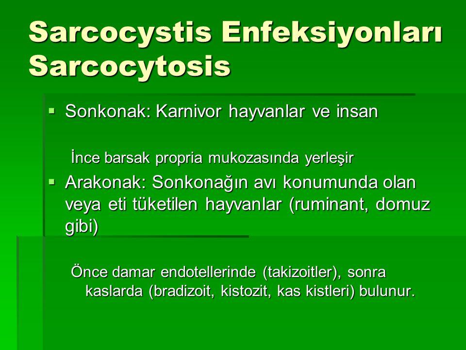 Sarcocystis Enfeksiyonları Sarcocytosis