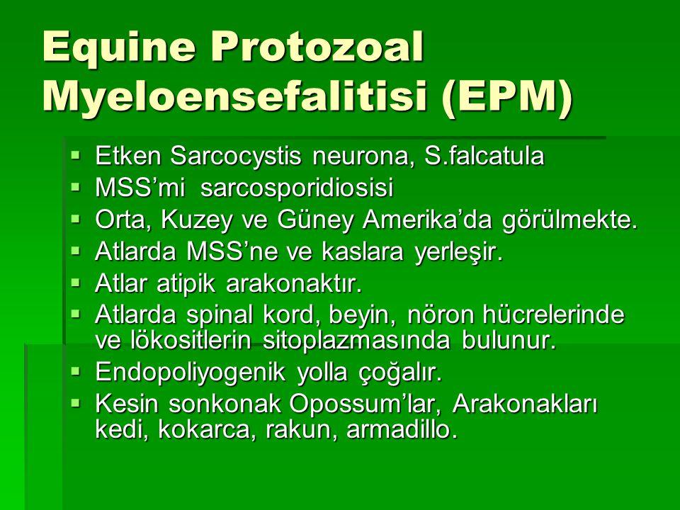 Equine Protozoal Myeloensefalitisi (EPM)