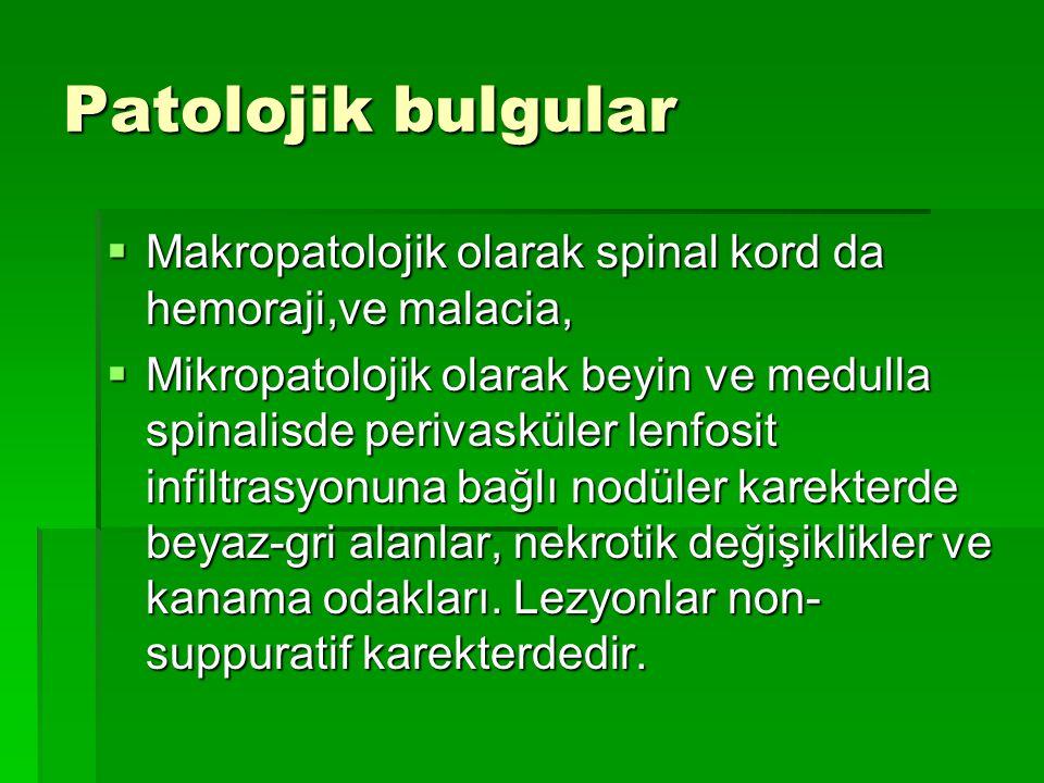 Patolojik bulgular Makropatolojik olarak spinal kord da hemoraji,ve malacia,