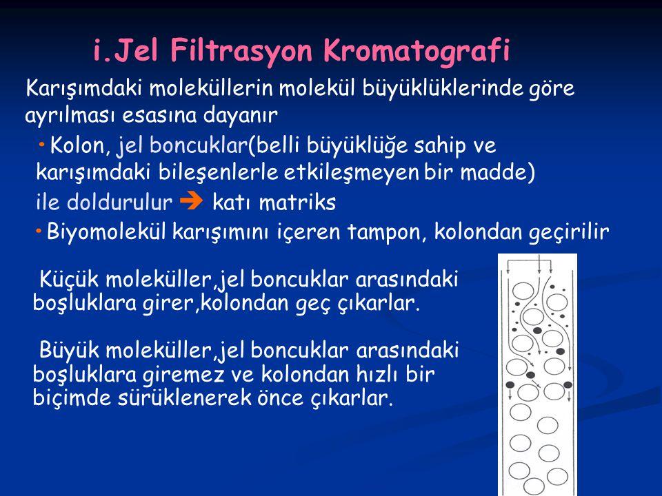 i.Jel Filtrasyon Kromatografi