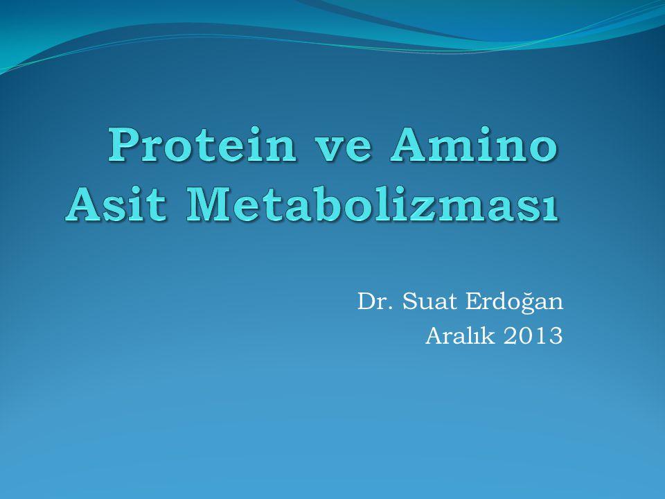 Protein ve Amino Asit Metabolizması