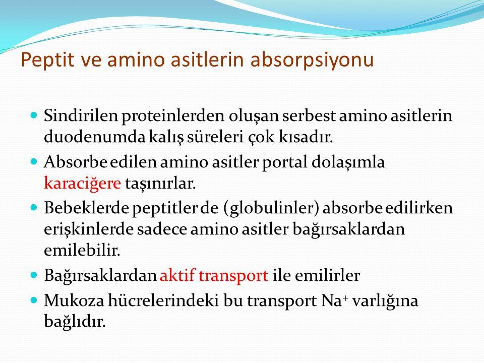 Peptit ve amino asitlerin absorpsiyonu