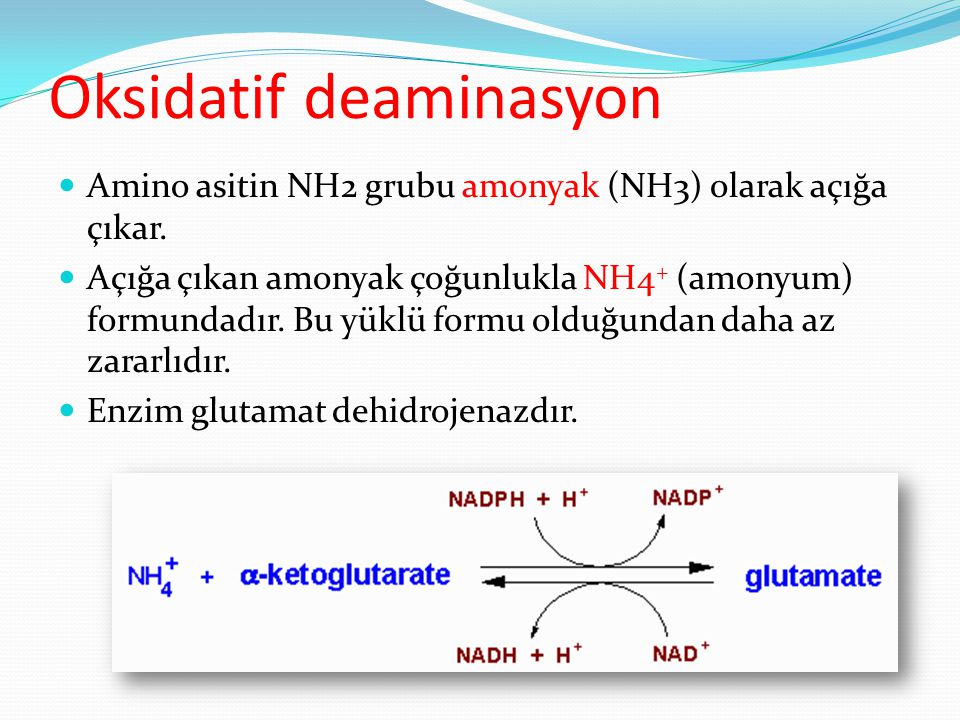 Oksidatif deaminasyon