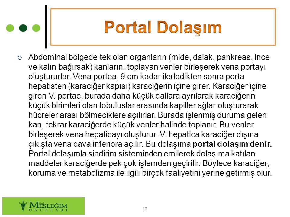 Portal Dolaşım