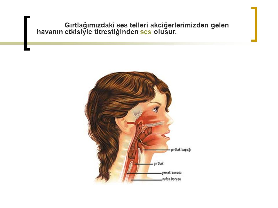 Gırtlağımızdaki ses telleri akciğerlerimizden gelen havanın etkisiyle titreştiğinden ses oluşur.