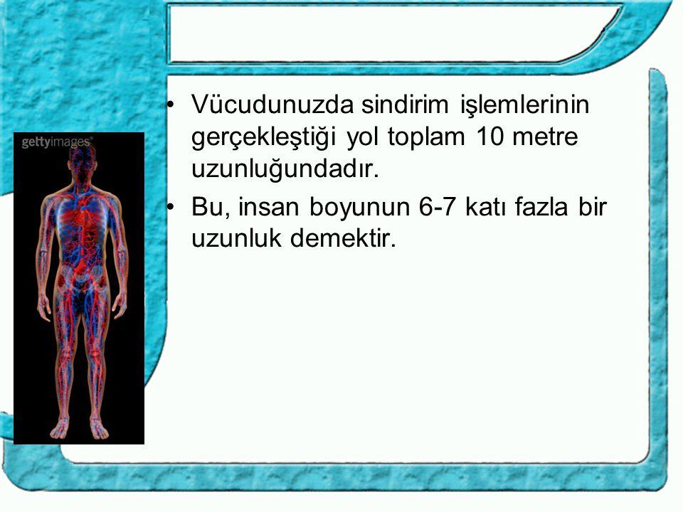 Vücudunuzda sindirim işlemlerinin gerçekleştiği yol toplam 10 metre uzunluğundadır.