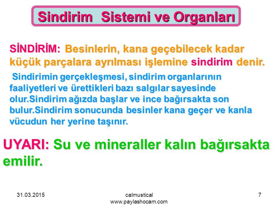 Sindirim Sistemi ve Organları
