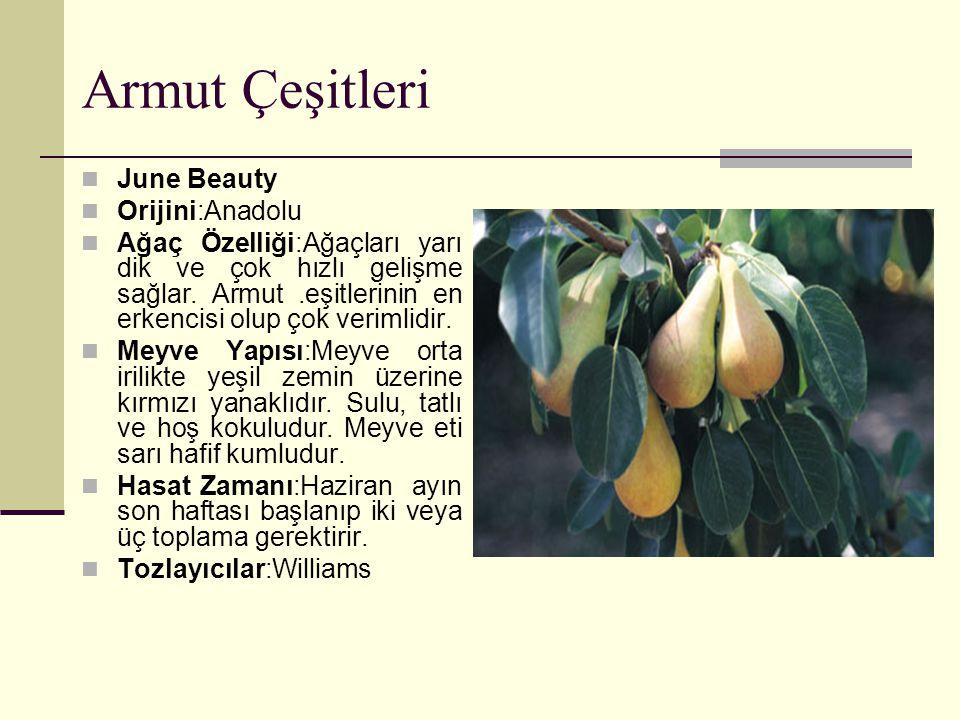 Armut Çeşitleri June Beauty Orijini:Anadolu