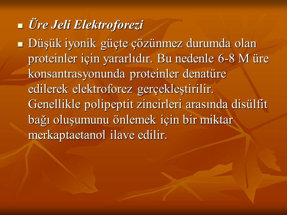 Üre Jeli Elektroforezi
