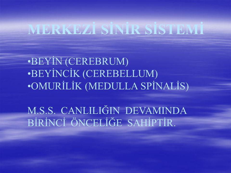MERKEZİ SİNİR SİSTEMİ BEYİN (CEREBRUM) BEYİNCİK (CEREBELLUM)