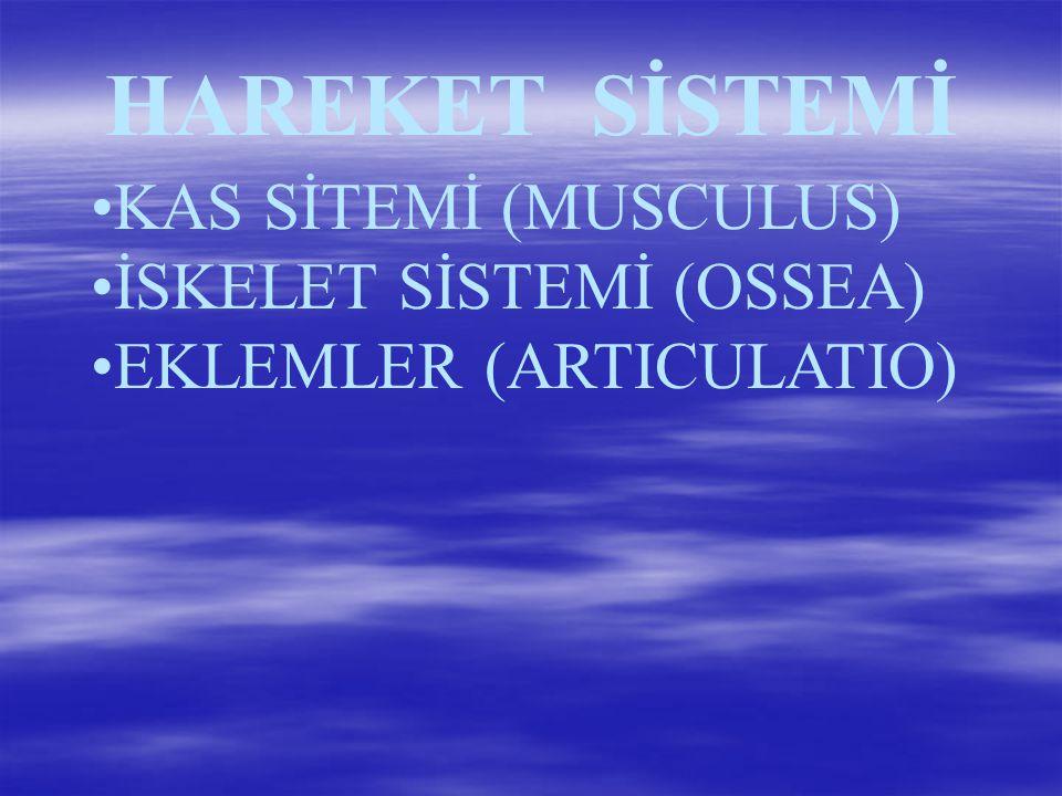 HAREKET SİSTEMİ KAS SİTEMİ (MUSCULUS) İSKELET SİSTEMİ (OSSEA)
