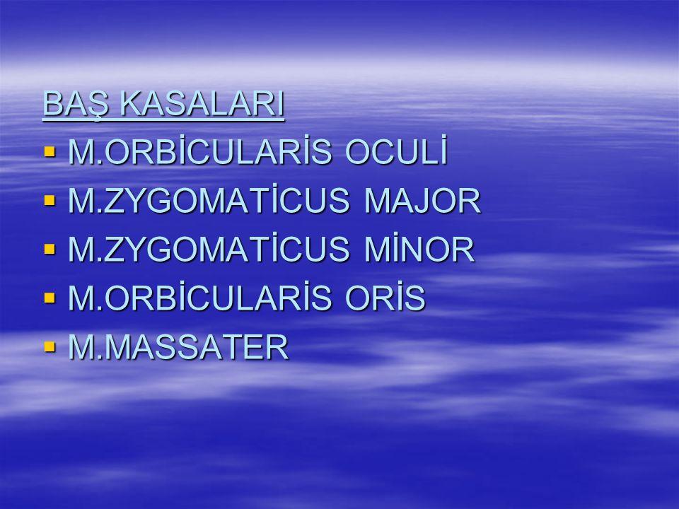 BAŞ KASALARI M.ORBİCULARİS OCULİ. M.ZYGOMATİCUS MAJOR.