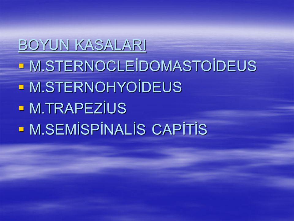 BOYUN KASALARI M.STERNOCLEİDOMASTOİDEUS M.STERNOHYOİDEUS M.TRAPEZİUS M.SEMİSPİNALİS CAPİTİS