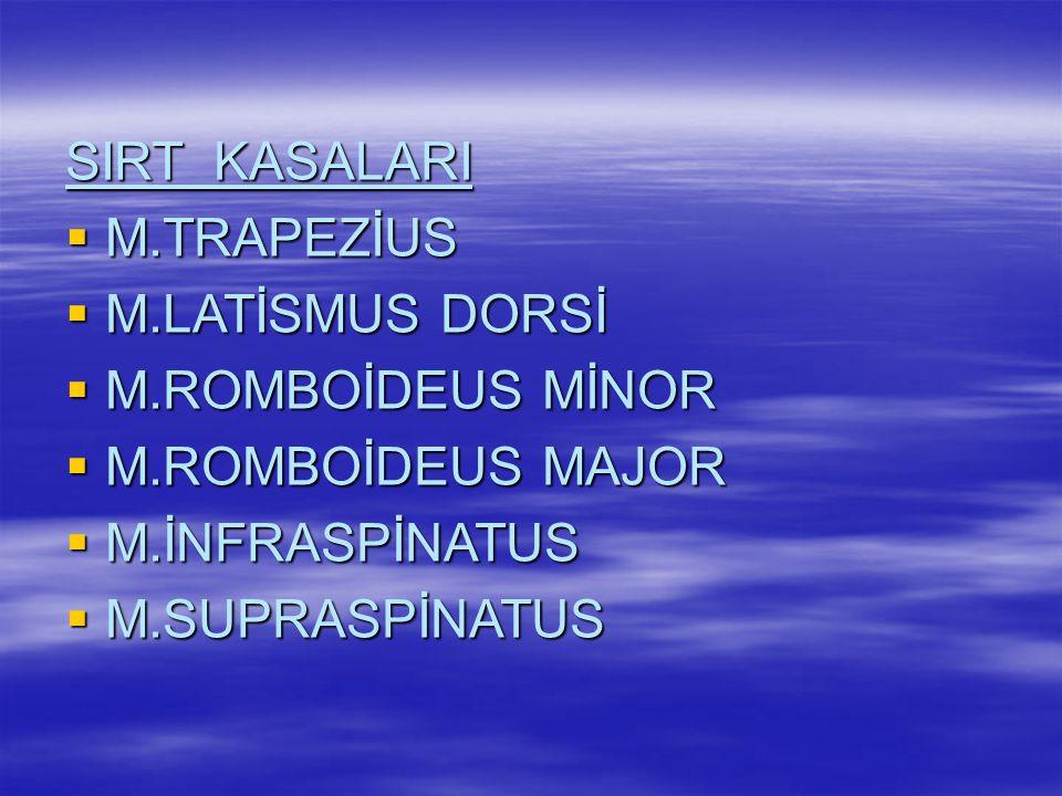 SIRT KASALARI M.TRAPEZİUS. M.LATİSMUS DORSİ. M.ROMBOİDEUS MİNOR. M.ROMBOİDEUS MAJOR. M.İNFRASPİNATUS.
