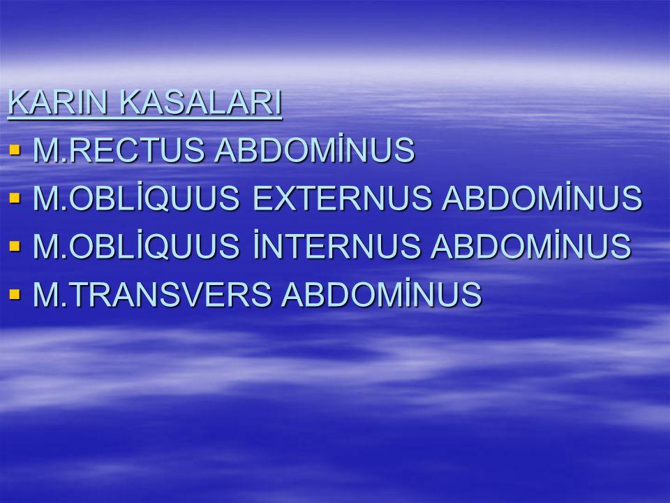 KARIN KASALARI M.RECTUS ABDOMİNUS. M.OBLİQUUS EXTERNUS ABDOMİNUS.