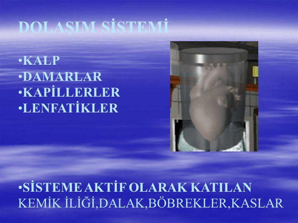 DOLAŞIM SİSTEMİ KALP DAMARLAR KAPİLLERLER LENFATİKLER