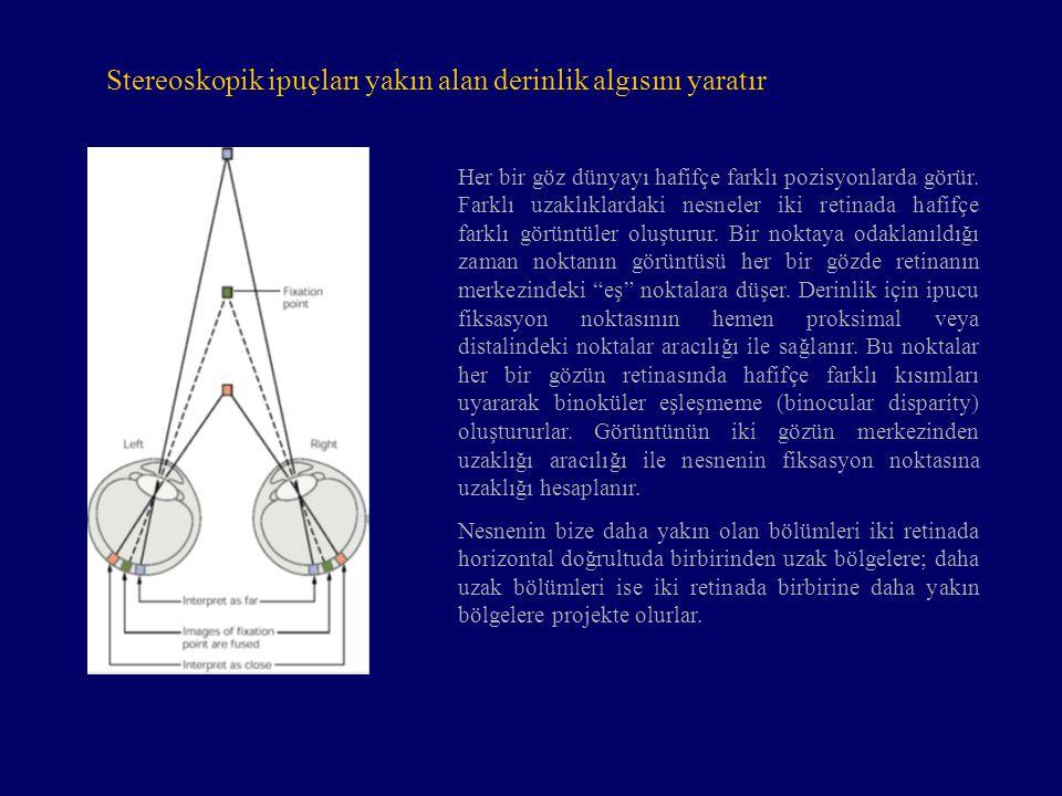 Stereoskopik ipuçları yakın alan derinlik algısını yaratır