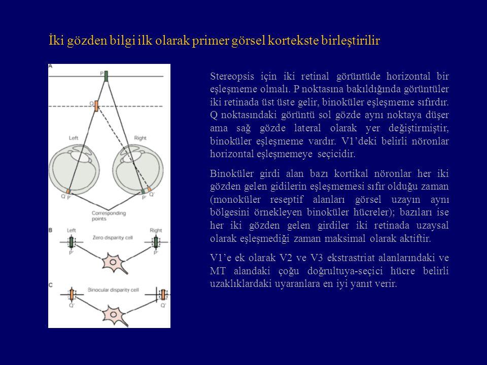 İki gözden bilgi ilk olarak primer görsel kortekste birleştirilir
