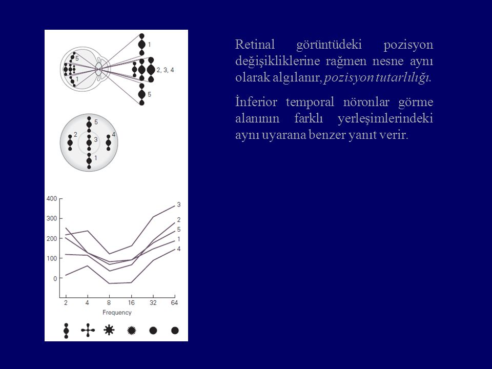 Retinal görüntüdeki pozisyon değişikliklerine rağmen nesne aynı olarak algılanır, pozisyon tutarlılığı.