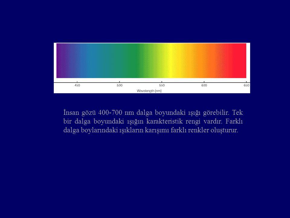 İnsan gözü 400-700 nm dalga boyundaki ışığı görebilir