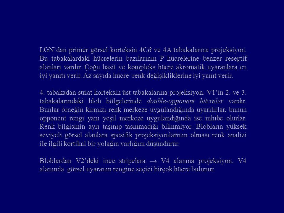 LGN'dan primer görsel korteksin 4C ve 4A tabakalarına projeksiyon