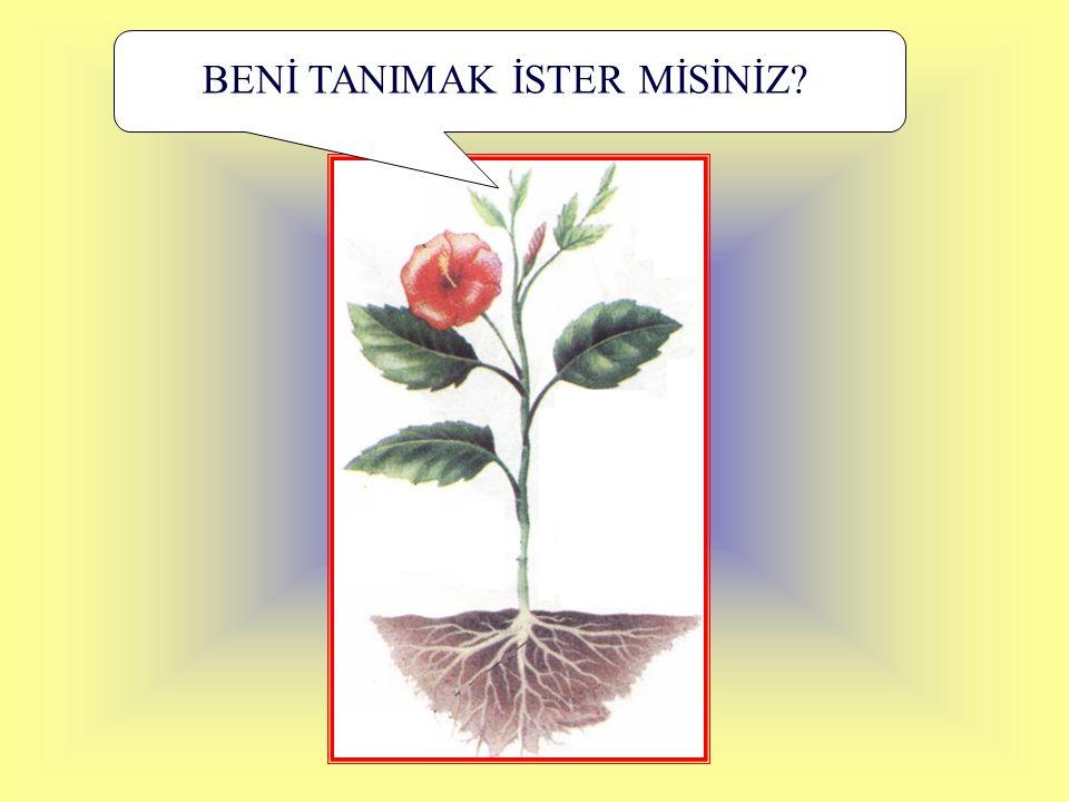 BENİ TANIMAK İSTER MİSİNİZ